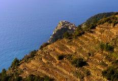 Tramonto in Cinque Terre, sguardo a terrazze dell'Italia - paesaggio della vigna Fotografia Stock