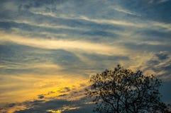 Tramonto con cielo blu e la siluetta dell'albero Fotografia Stock