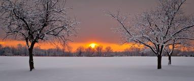 Tramonto con gli alberi che incorniciano l'immagine Fotografie Stock