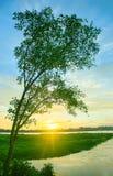 Tramonto con il singolo albero nel fiume fotografia stock libera da diritti