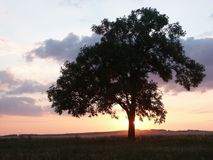 Tramonto con l'albero Fotografia Stock