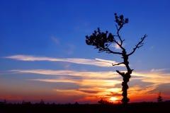Tramonto con l'albero solo Fotografia Stock