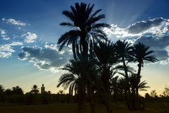Tramonto con la moschea e le palme da datteri contro cielo blu nuvoloso. Immagini Stock Libere da Diritti