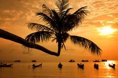 Tramonto con la palma e le barche sulla spiaggia tropicale fotografia stock