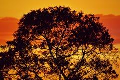 Tramonto con la siluetta dell'albero Immagini Stock