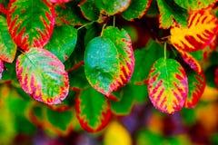 Tramonto con le piante Fotografia Stock Libera da Diritti