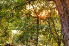 Tramonto cremisi di HDR sopra Praga con la vegetazione e le strutture del parco di Vysehrad nella priorità alta Fotografia Stock Libera da Diritti
