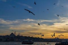 Tramonto dal ponte di Galata Costantinopoli, Turchia Fotografie Stock Libere da Diritti