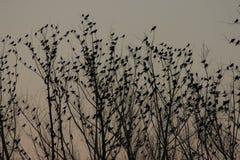 Tramonto degli uccelli in un albero fotografia stock