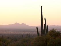 Tramonto del cactus Fotografia Stock Libera da Diritti