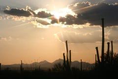 Tramonto del cactus Immagini Stock