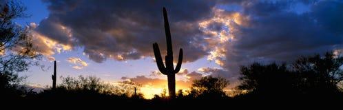 Tramonto del cactus del Saguaro Fotografia Stock Libera da Diritti