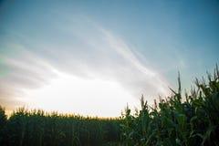 Tramonto del campo della piantagione del cereale Fotografie Stock