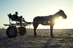 Tramonto del carretto e del cavallo sulla spiaggia brasiliana Fotografia Stock