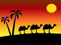 tramonto del deserto Fotografia Stock Libera da Diritti