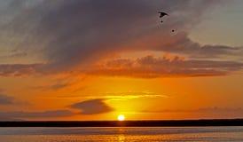 Tramonto del fiume con il volo dell'uccello oltre Fotografia Stock Libera da Diritti