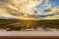 Tramonto del giacimento del riso e tavola di legno vuota per l'esposizione del prodotto e la m. Fotografie Stock