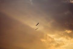 Tramonto del mare con gli uccelli Immagine Stock