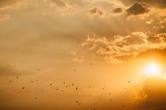 Tramonto del mare con gli uccelli Fotografia Stock Libera da Diritti