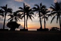 Tramonto del veiw della noce di cocco Immagini Stock Libere da Diritti