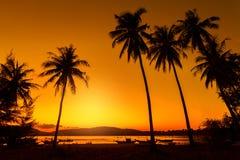 Tramonto delizioso sopra l'oceano Contro il cielo la siluetta scura dell'cocchi immagine stock