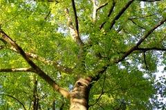 Tramonto 006 dell'albero Immagine Stock