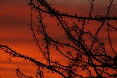 Tramonto dell'albero W/Red di autunno fotografia stock libera da diritti