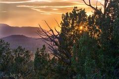 Tramonto dell'Arizona dietro l'albero immagini stock