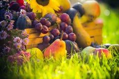 Tramonto dell'erba della frutta del raccolto di autunno del giardino Fotografie Stock Libere da Diritti