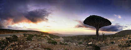 Tramonto dell'isola di Socotra fotografie stock