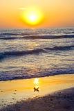 Tramonto della Florida fotografia stock libera da diritti