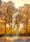 Tramonto della foresta di inverno Fotografie Stock Libere da Diritti