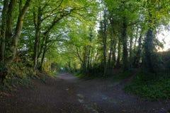 Tramonto della molla del mulino a vento di Halnaker, vicino a Chichester nel parco nazionale del sud dei bassi fotografia stock