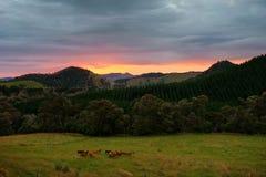 Tramonto della Nuova Zelanda Fotografie Stock Libere da Diritti