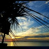 Tramonto della palma fotografia stock