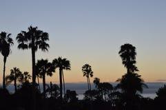 Tramonto della palma Fotografie Stock Libere da Diritti