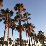 Tramonto della palma di California Immagine Stock