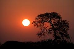 Tramonto della savanna fotografie stock libere da diritti