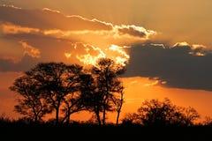 Tramonto della savanna Fotografia Stock Libera da Diritti
