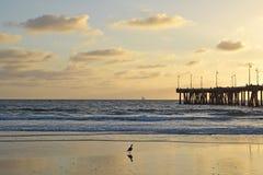 Tramonto della spiaggia di Venezia Immagini Stock Libere da Diritti