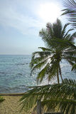 Tramonto della Sri Lanka su una spiaggia Immagine Stock Libera da Diritti
