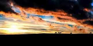 Tramonto delle siluette dei cavalli fotografia stock libera da diritti