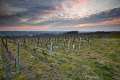 Tramonto delle vigne di Chenonceaux Immagini Stock Libere da Diritti