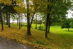 Tramonto di alba con i colori caldi dell'ombra degli alberi immagine stock libera da diritti