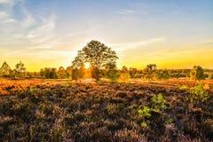 Tramonto di alba nella brughiera del neburg del ¼ di LÃ fotografia stock libera da diritti