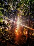 Tramonto di Amazon fotografia stock