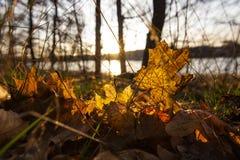 Tramonto di autunno sul Mar Baltico fotografia stock