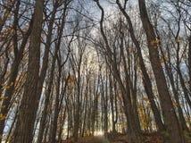 Tramonto di caduta oltre gli alberi nudi Immagini Stock