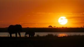 Tramonto di Chobe Fotografia Stock Libera da Diritti