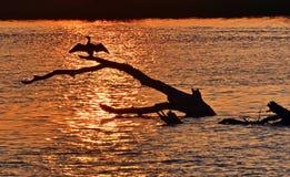Tramonto di delta di Danubio immagini stock